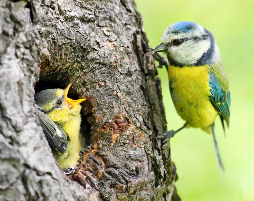 Oiseaux arbre